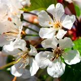 Insektnet og pollennet